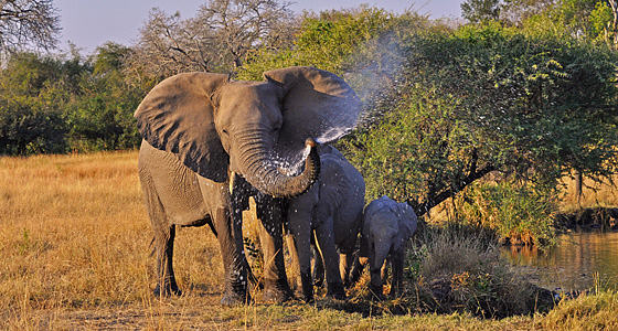 Guided Safaris, Far and Wild Safaris
