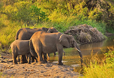 Big Five South African Guided Safaris Tours