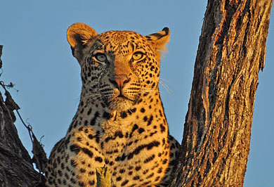 Kruger National Park Big Five Wildlife Johannesburg Guided Safaris Tours Mpumalanga