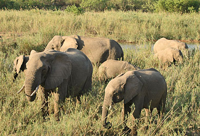 Guided Safaris Tours Addo Elephant National Park Eastern Cape South Africa