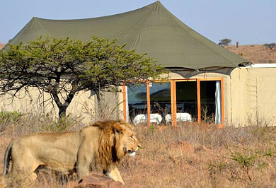 Guided Safaris Tours Nambiti Private Game Reserve Ndaka Safari Lodge KwaZulu-Natal South Africa