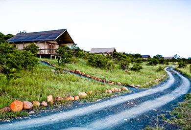 Guided Safaris Tours Nambiti Private Game Reserve Springbok Lodge KwaZulu-Natal South Africa