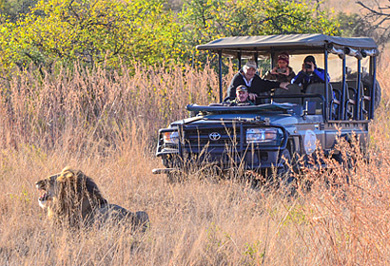 Lion Game Drives Nambiti Private Game Reserve Photographic Photo Safaris Private Safaris Tours Guide
