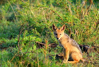 Fox Nambiti Private Game Reserve Photographic Photo Safaris Private Safaris Tours Guide