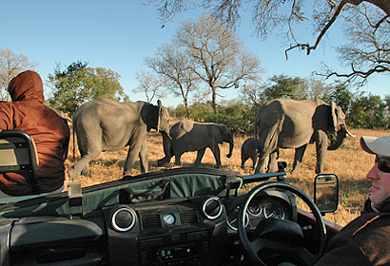 Elephants Game Drives Photographic Photo Safaris Sabi Sands Private Game Reserve Private Safaris Tours Guide