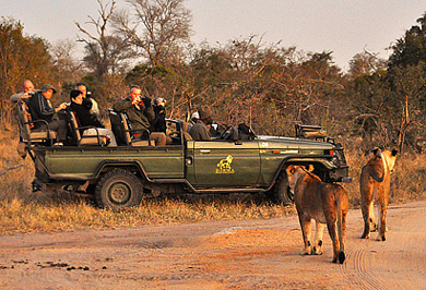 Lion Private Safaris Tours Guide Photographic Photo Safaris