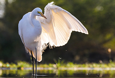 Great Egret Hide Zimanga Private Game Reserve Hide Photographic Safaris Private Safaris Tours Guide