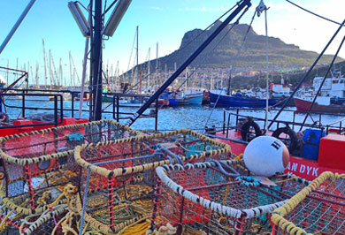 Cape Town Hout Bay Garden Route Guided Tours Western Cape South Africa